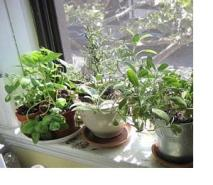 during Winter months, plants will require supplemental lighting