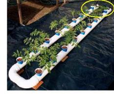 Build this extremely easy and reliable homemade hydroponic system