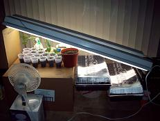 A standard fluorescent shop light is all that is needed for seedlings and small clones