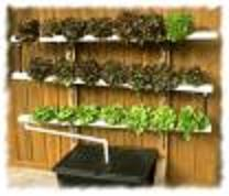 Growing A Hydroponic Garden Vertically May Pose An Extra Challenge  (obviously), But Can Be Done A Few Different Ways. If You Are Creative,  Hands On, ...