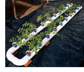 With a drip feeder line (or two) on every plant, they design could easily be run as a drip system (using the PVC pipes for water return)