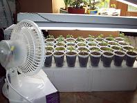 an oscillating fan for seedlings